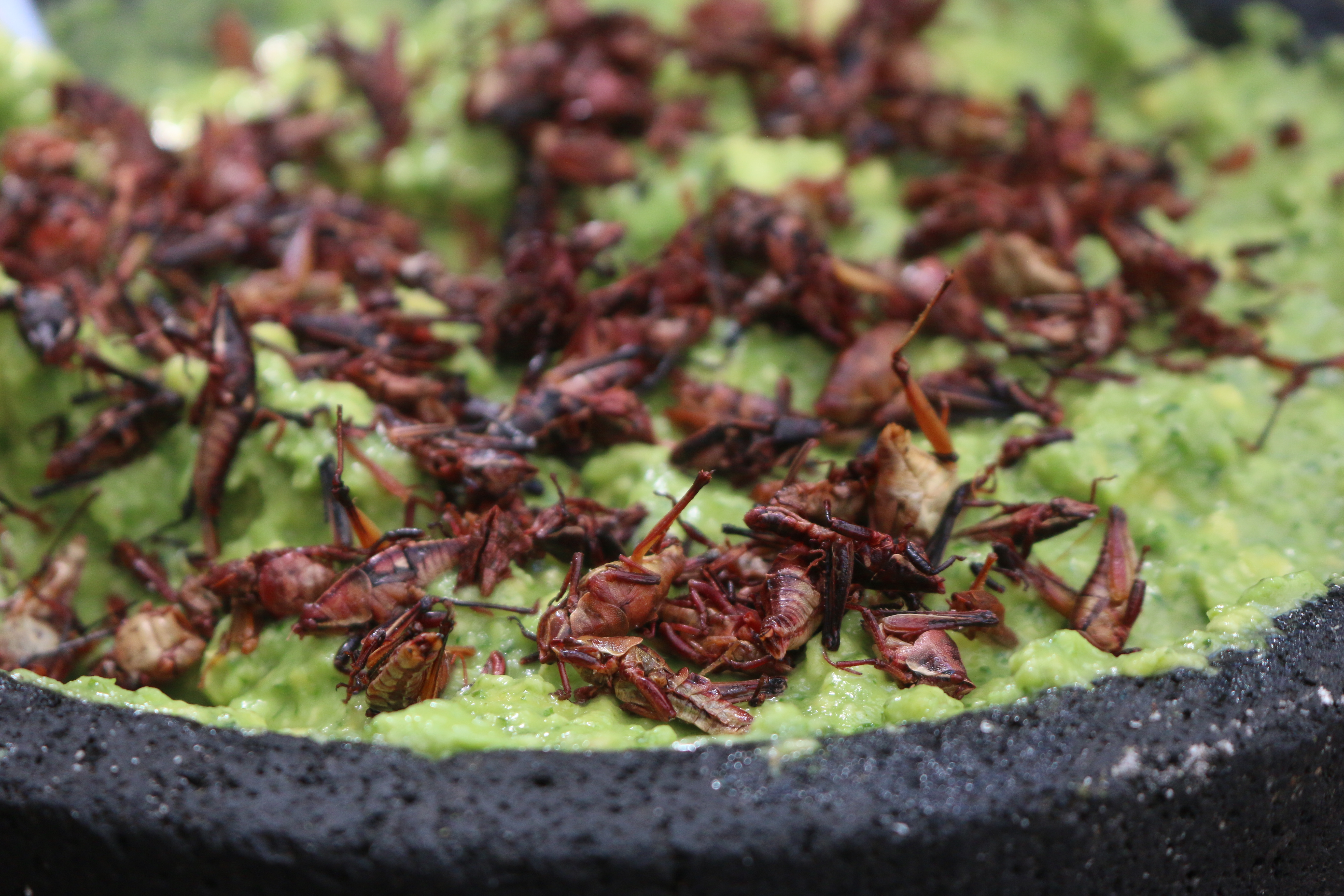 Unico 20°87° is proud of its authentic Mexican dining options, like fresh guacamole, even sprinkled with fried grasshoppers, if you'd like!