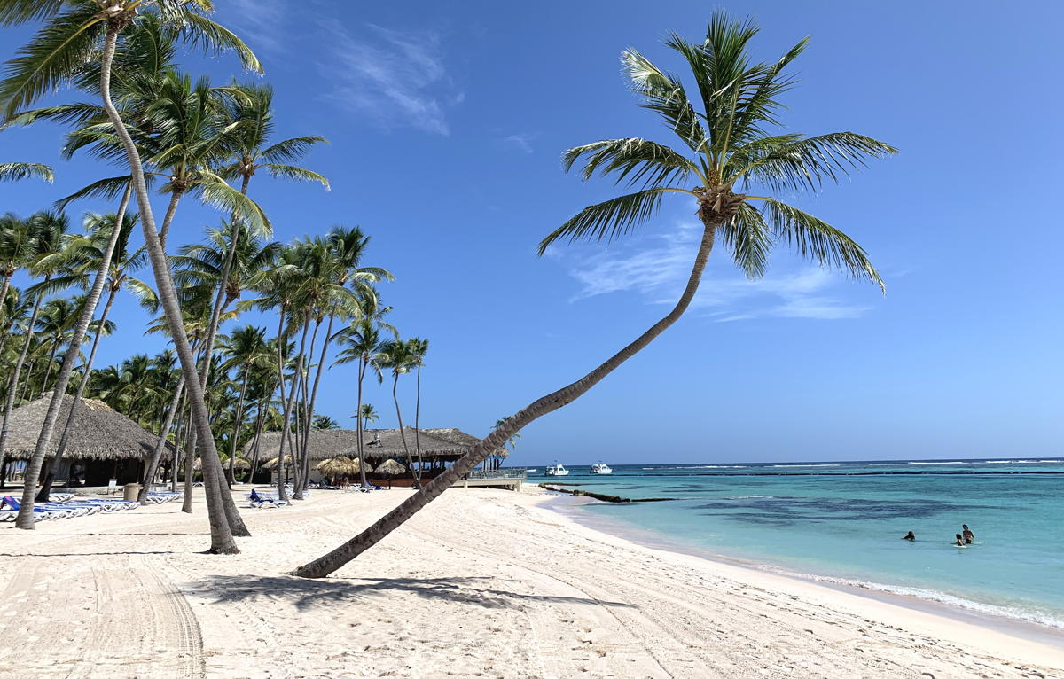 Palm trees surround the beachfront at Club Med Punta Cana.