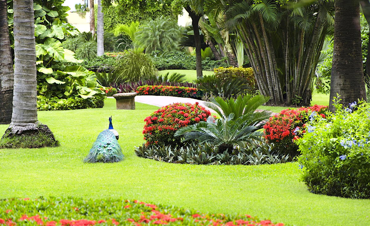 Velas Vallarta, with its gardens, koi fish ponds and roaming peacocks, is kept in pristine shape. (Velas Resorts)