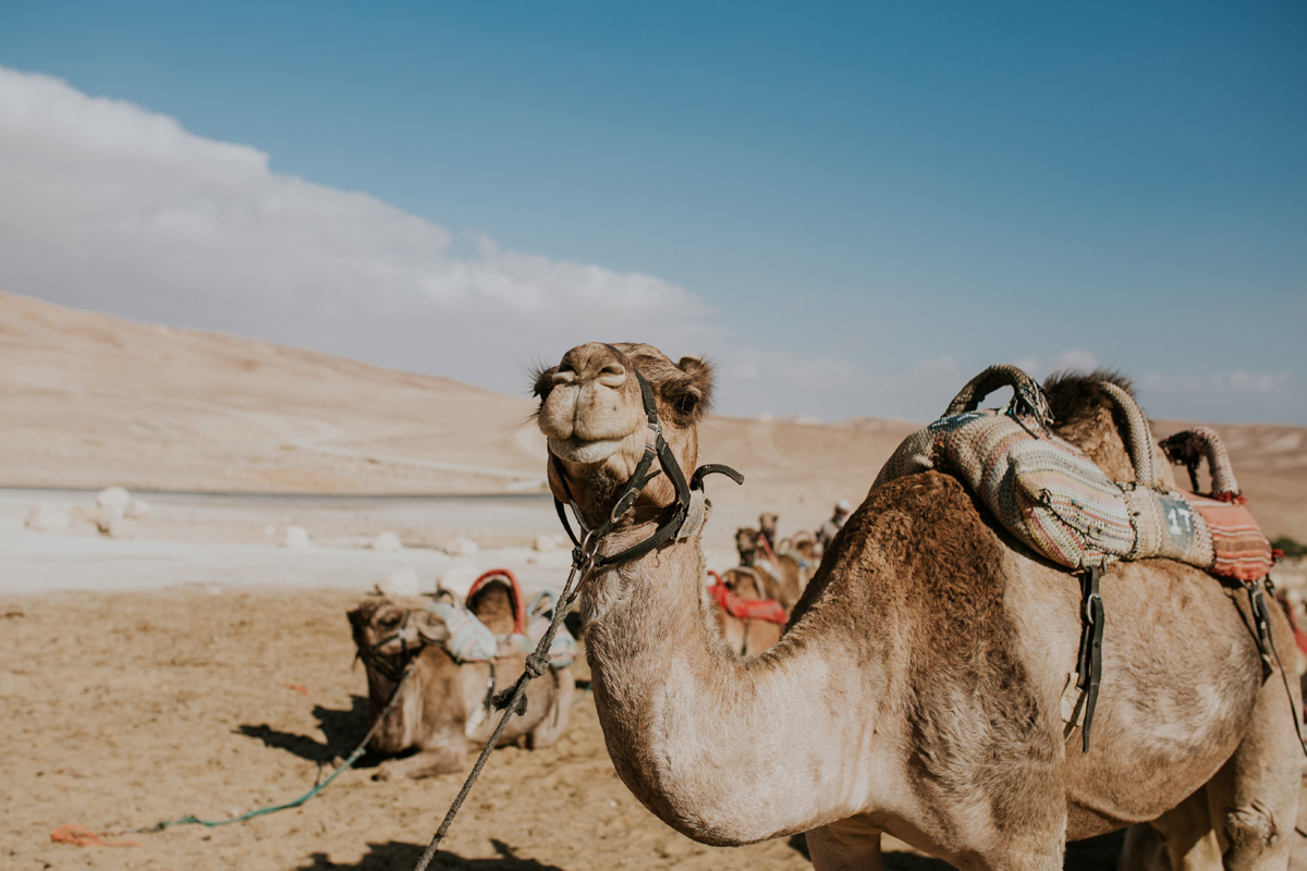 Tours of the Negev Desert are increasing in popularity