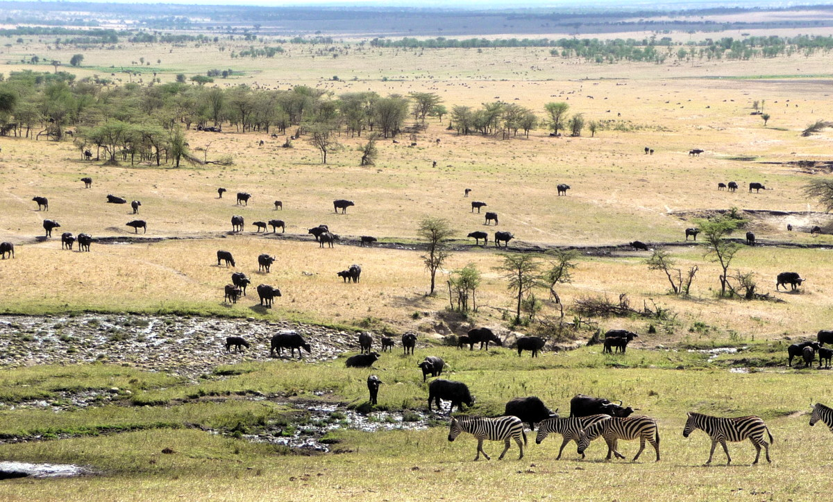 Animals in the Serengeti, one of Almond's favourite vacation spots. Photo courtesy of Cindy Almond.