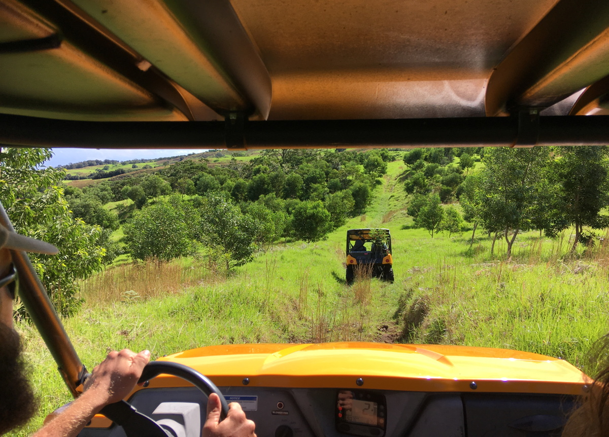 Off roading with Legacy Forest Tours on Big Island. Photo: Gordon Bowness