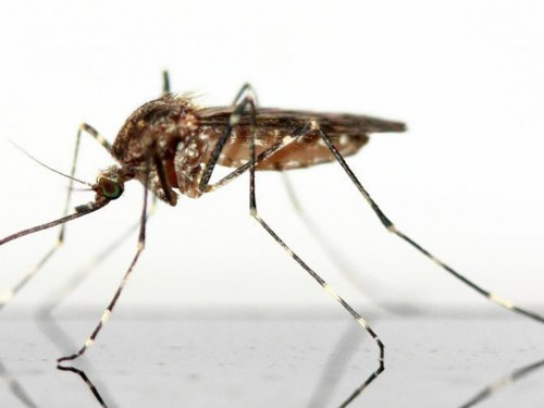 CDC issues Zika warning for Miami
