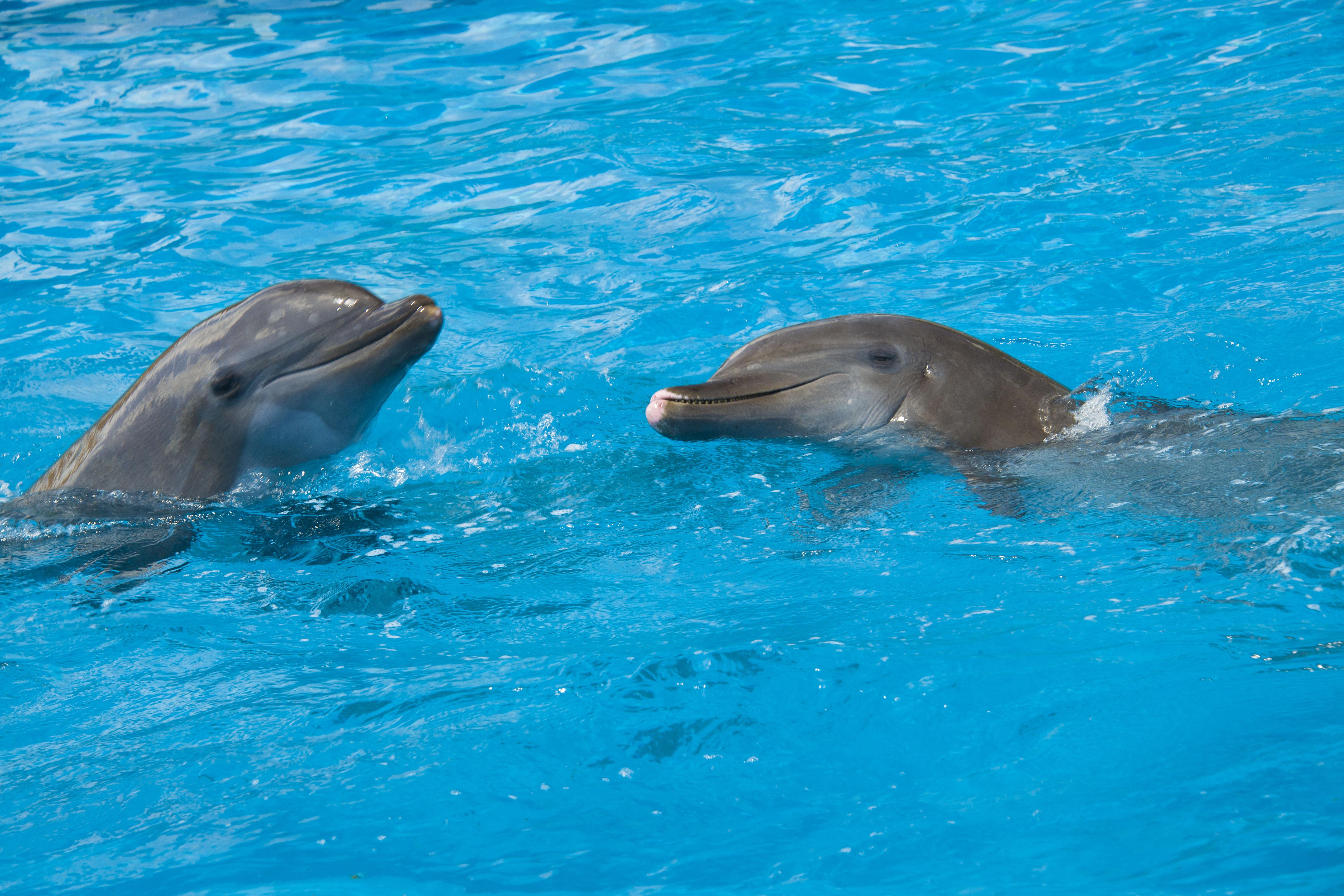 SeaWorld Orlando shelters dolphins