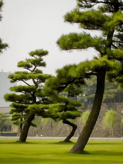 Japanese Garden, Tokyo
