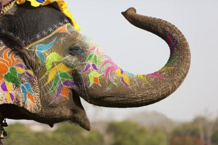 Luxury Gold shines Spotlight on India