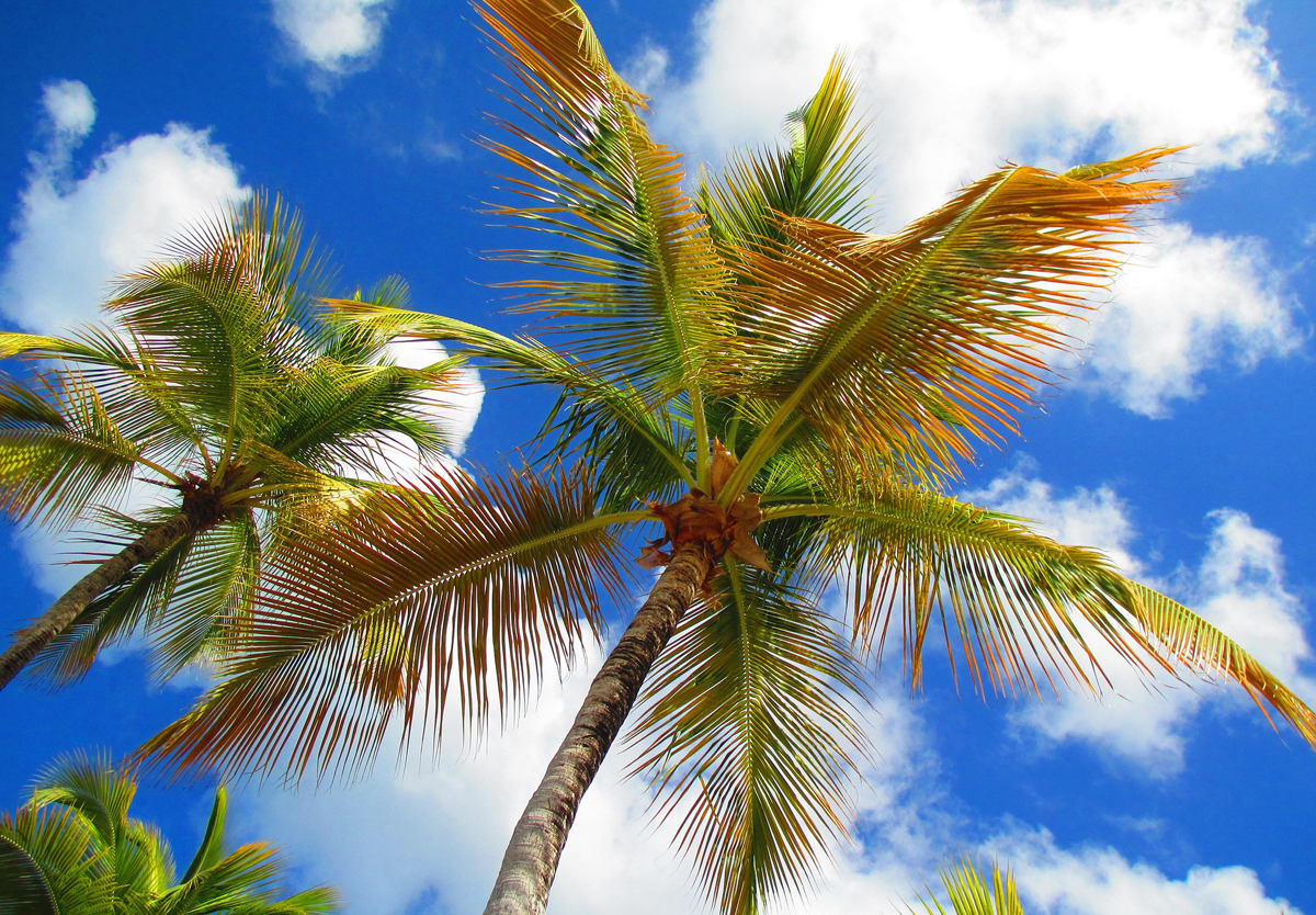 Caribbean still the top int'l travel spot for Canadians