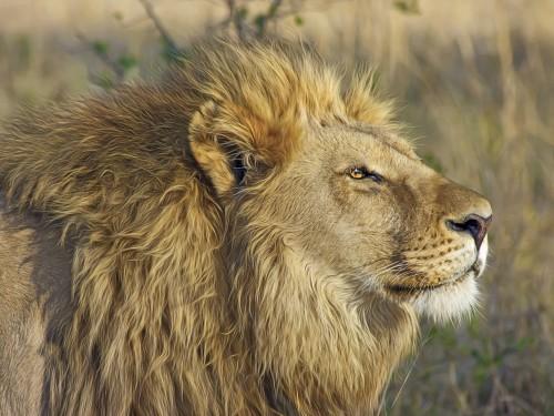 Treadright Foundation partners with Wildlife Conservation Society