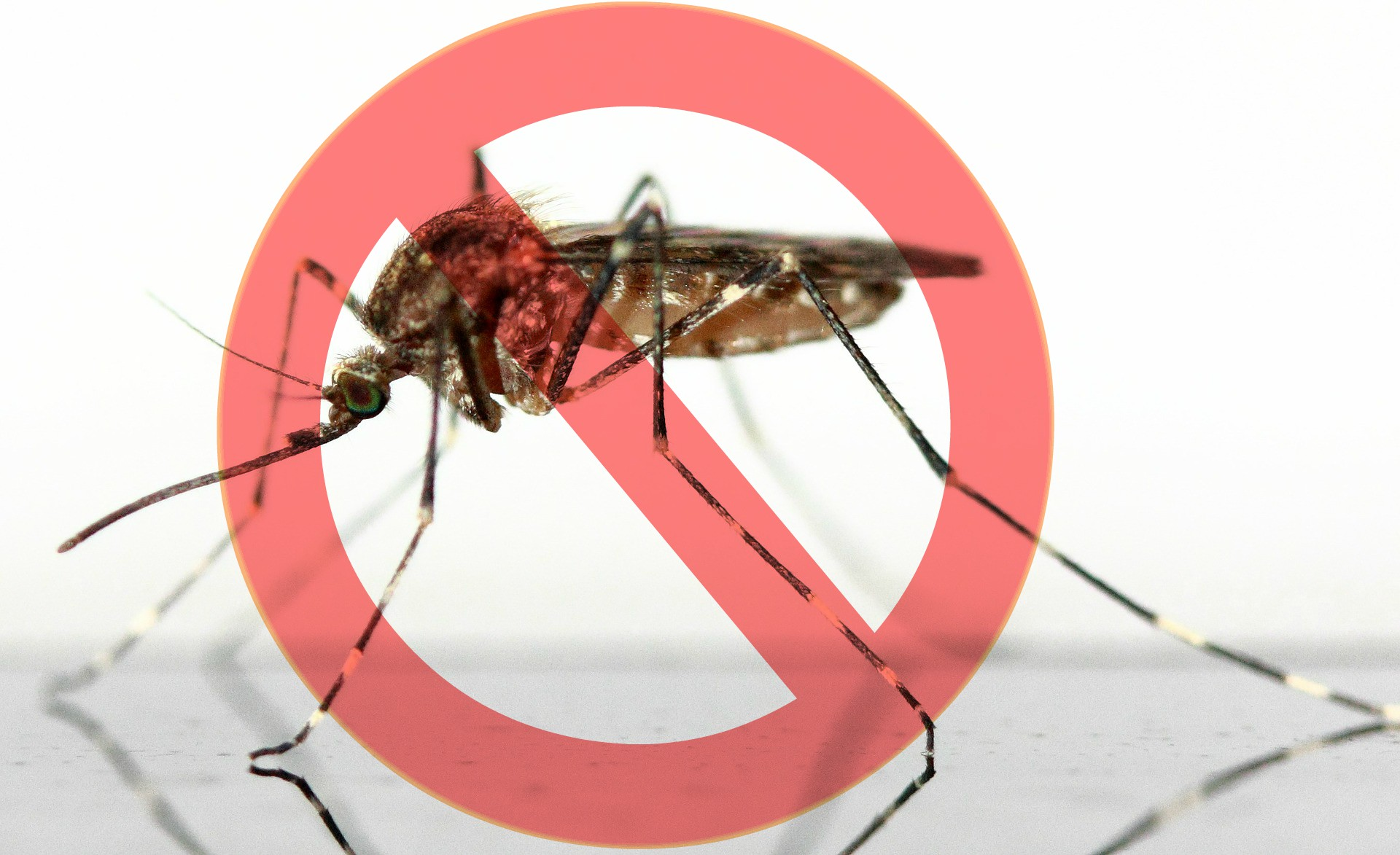 CDC officially declares Bahamas Zika free