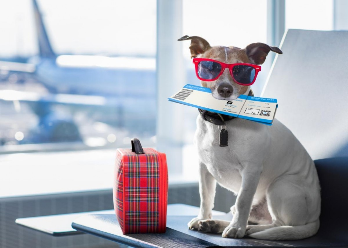 What you need to know about flying with your pet