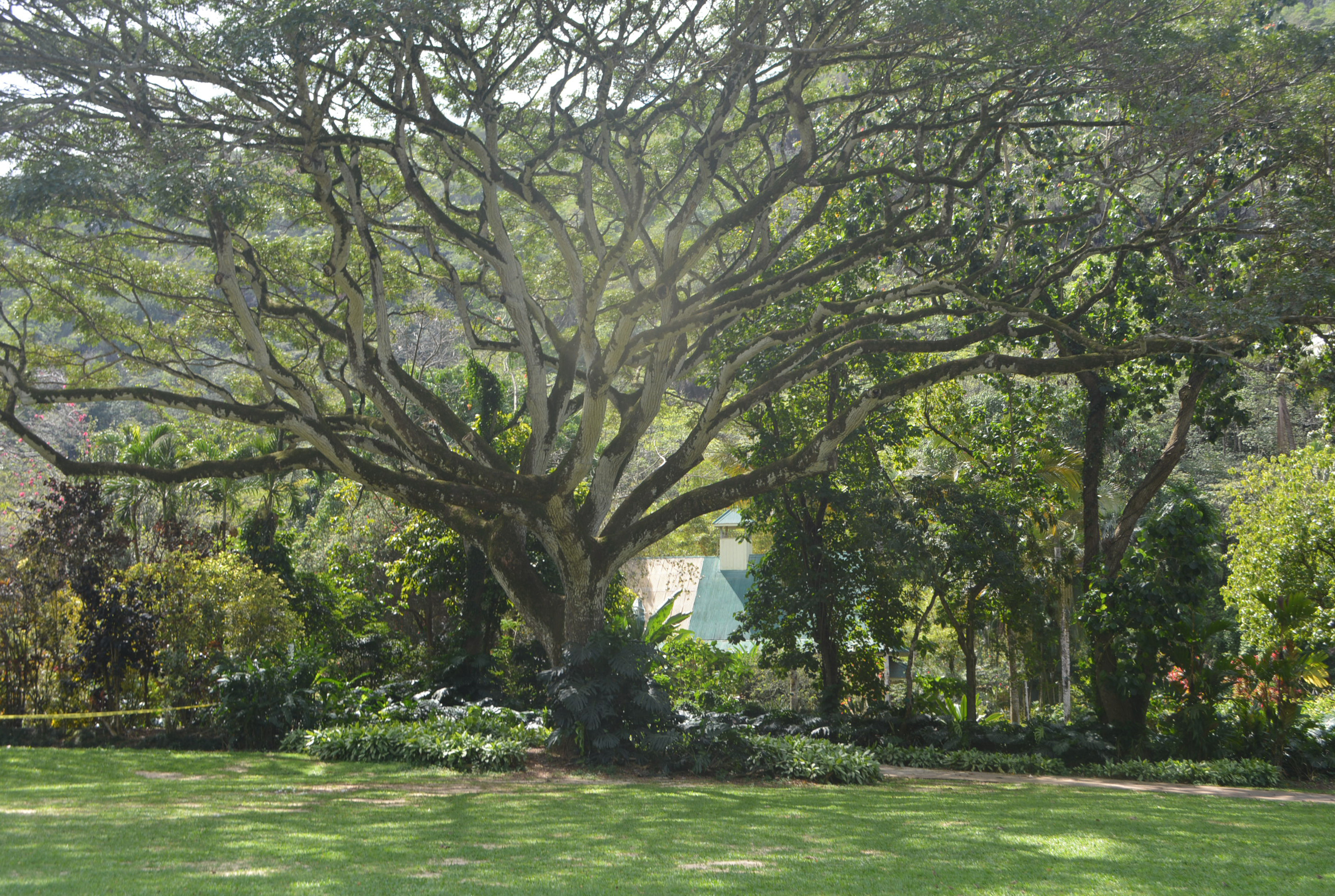Waimea Valley.JPG