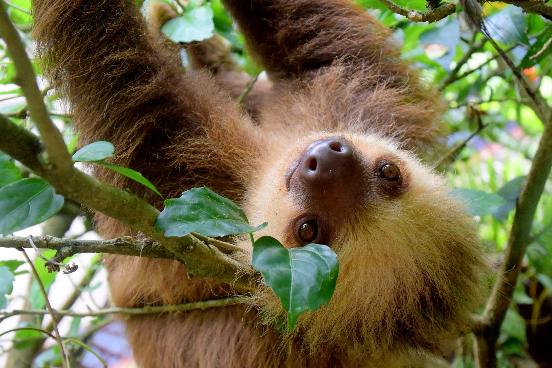Costa Rica tempts travellers with new hotels and attractions