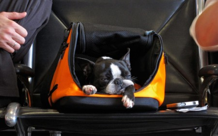 Small pets can fly in Economy with Transat