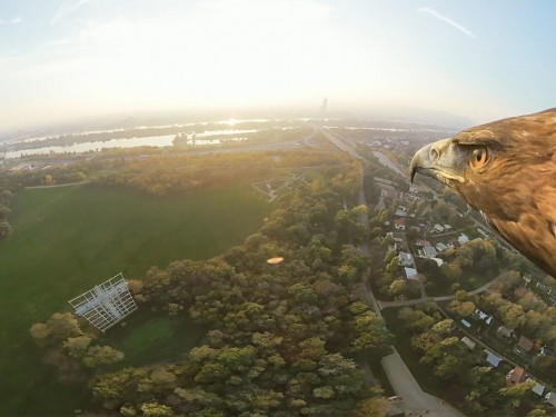 Here's what Vienna looks like through the eyes of an eagle