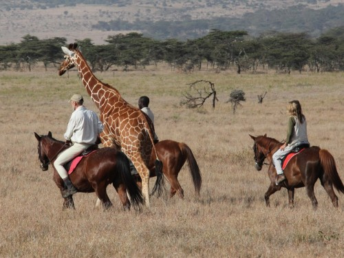 The new safari: take a ride on the wild side