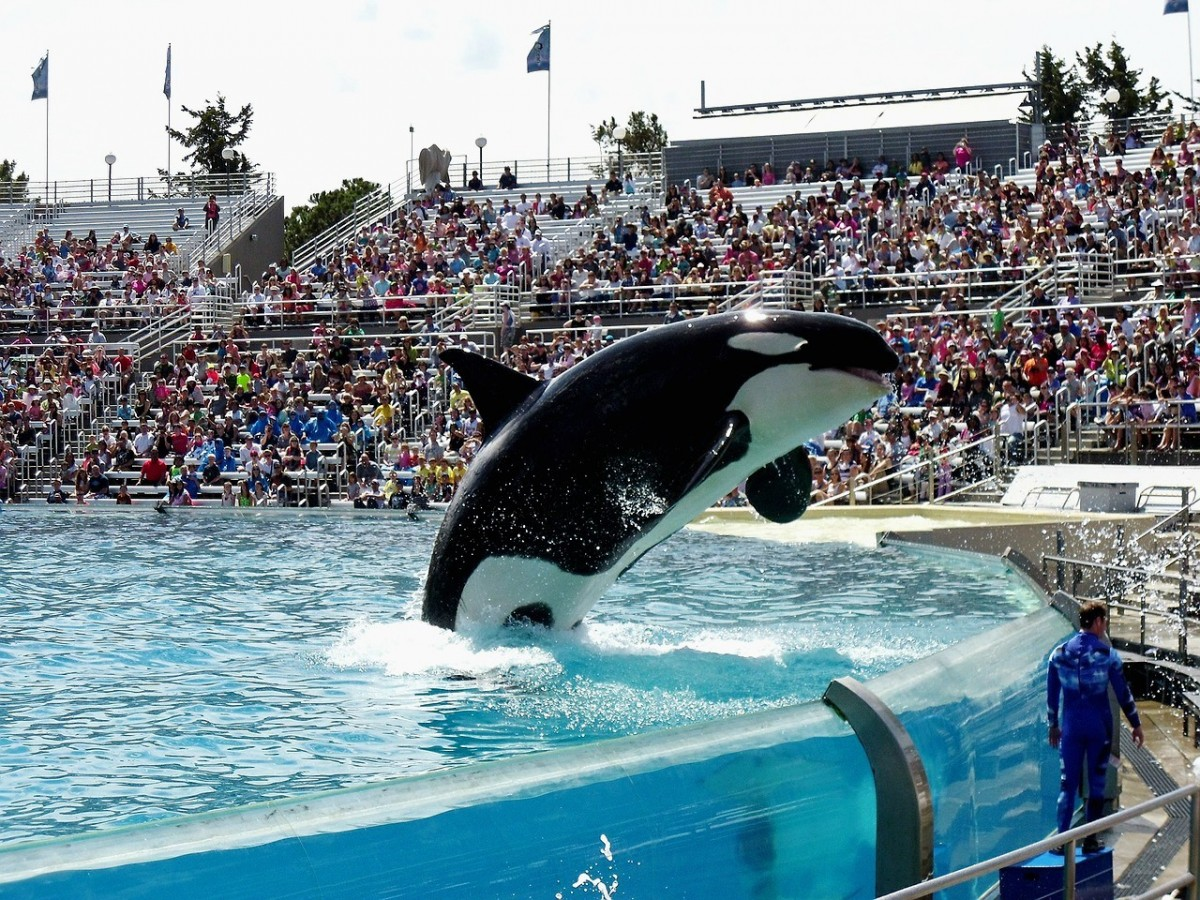 Air Canada & WestJet are fin-ished with SeaWorld