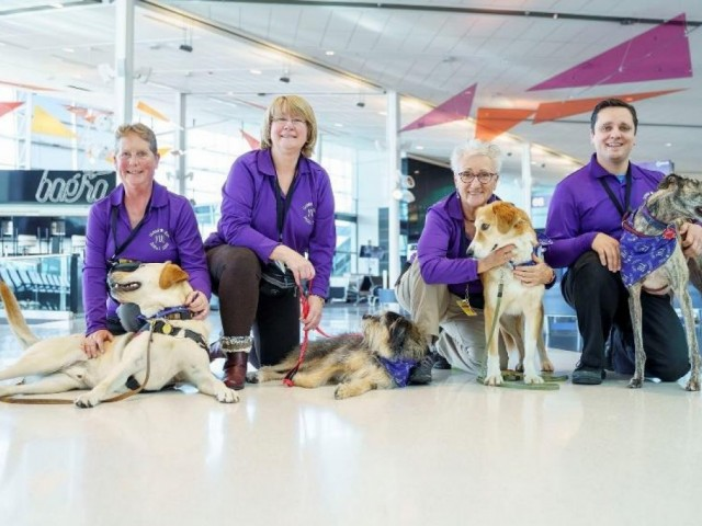 Squad goals: YUL gets 30 companion dogs for anxious travellers