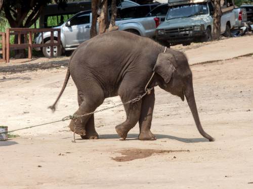 Most travel trade companies turn a blind eye to animal tourism, report says
