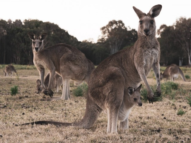 Goway celebrates Downunder Month with amazing agent incentives