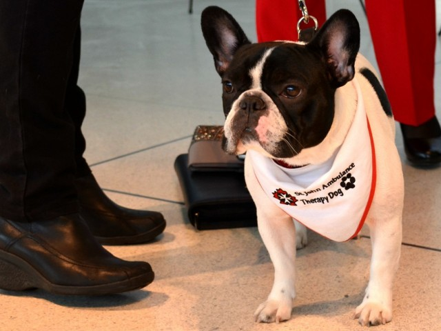 YYZ hires 15 friendly dogs in support of stress-free travel