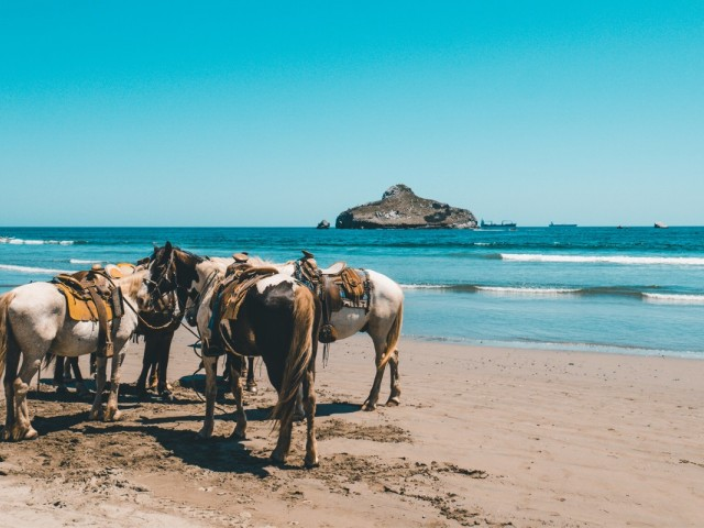 HAL adds 20 Mexican Riviera cruises for 2019/2020