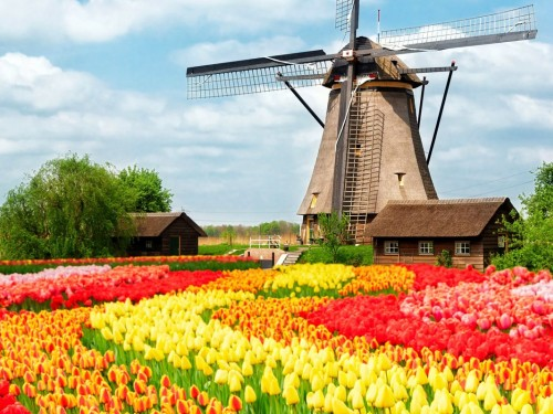 A short guide to experiencing spring in the Netherlands