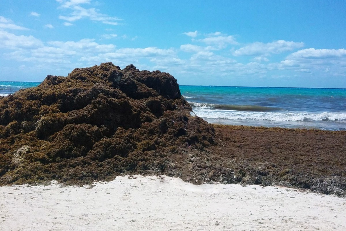 Mexico's sargassum problem now extends all the way to West Africa