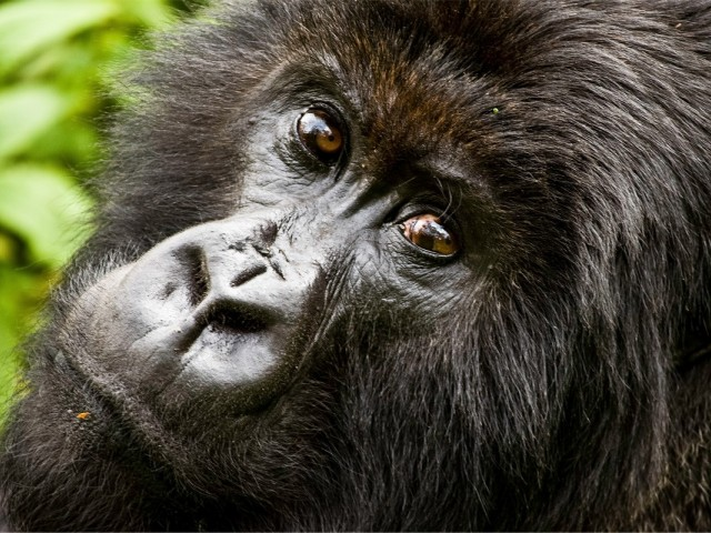 G Adventures adds 12 new tours to the Jane Goodall Collection