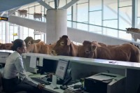 WestJet stands out from the herd with funny new video campaign