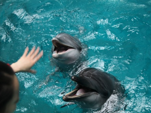 Air Canada & Transat promise to eliminate dolphin tourism from packages