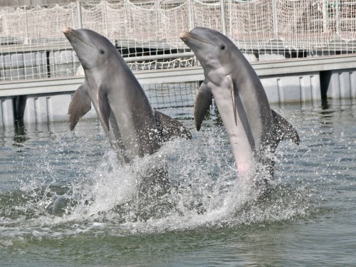 Sunwing & WestJet are removing dolphin tourism from their vacation packages