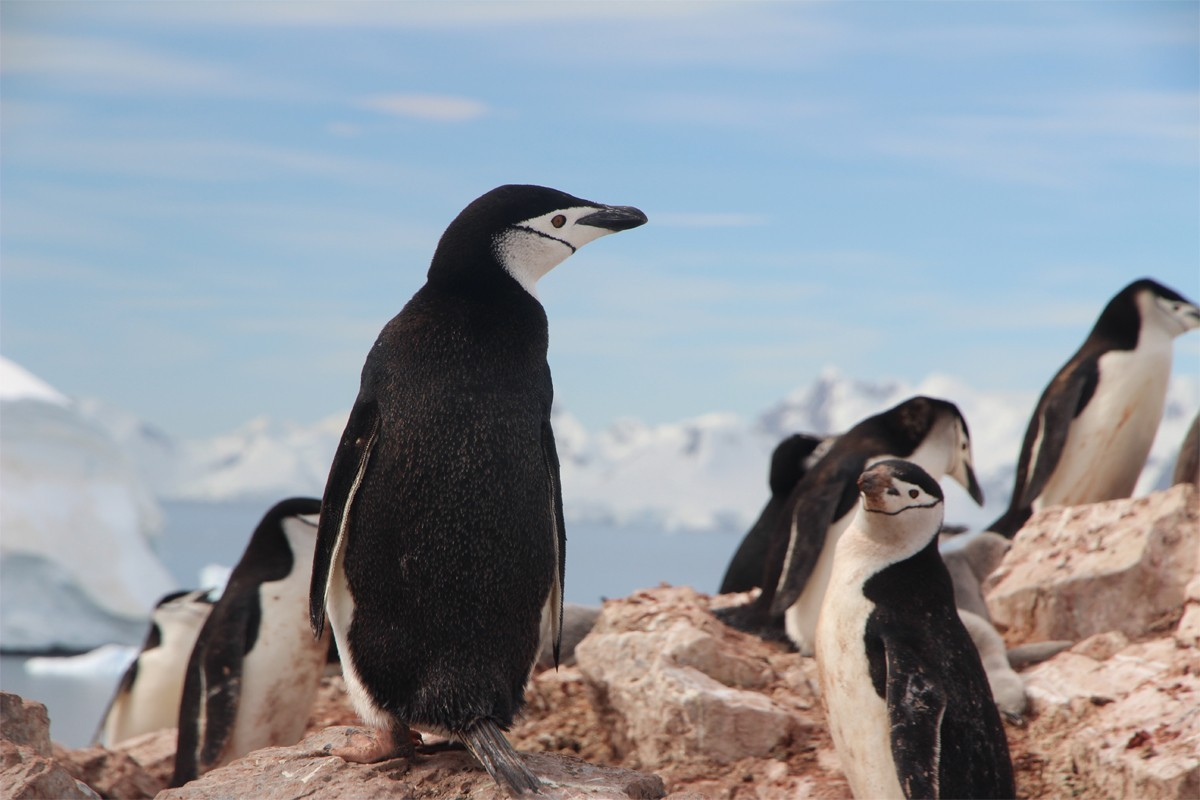 Adventure Canada launches 3 new Antarctica expeditions