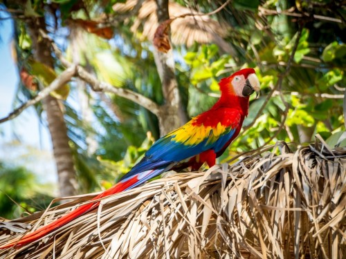 Costa Rica updates entry protocols, removes PCR test requirement