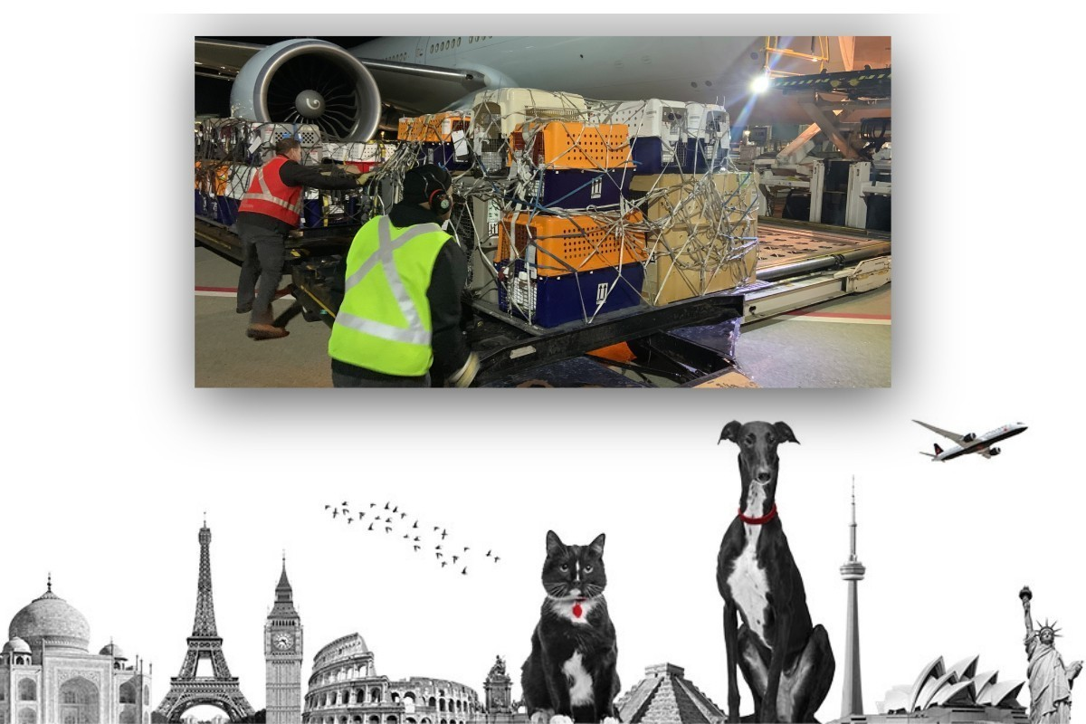 """70 cats & dogs fly home to Australia via """"Noah's Plane"""" with Air Canada"""