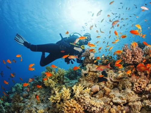 "Sandals unveils scholarship, marine conservation effort honouring ""Butch"" Stewart"