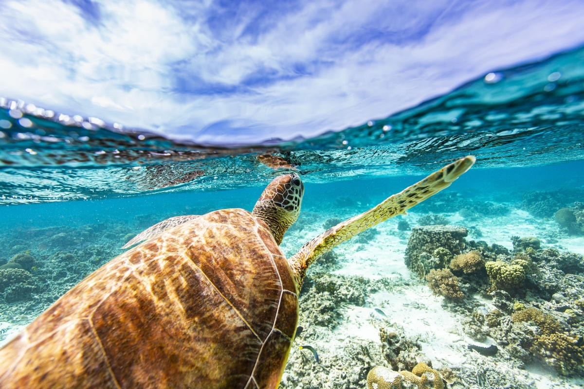 Help turtles, rebuild reefs: Sandals celebrates World Oceans Day with eco initiatives