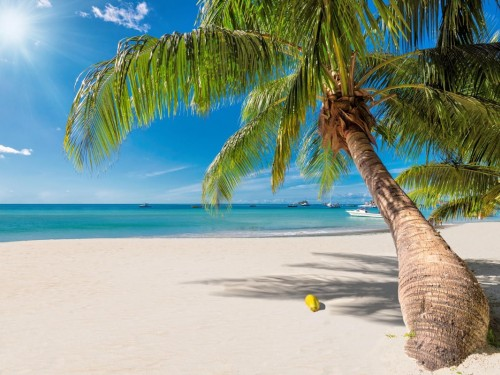 CTO invites industry to promote Caribbean's comeback during Caribbean Tourism Month